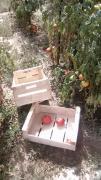 ящики для помідор