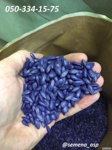 Семена подсолнечника ФОРВАРД F1