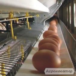 Лента яйце сбора 100-300 мм.