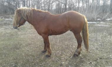 Продам коня 7 років