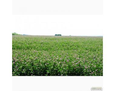 Семена полевого клевера. Опт