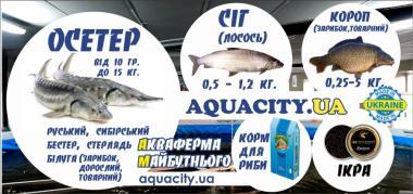 Осётр, карп, лосось. Зарыбок, товарный, малёк. Корм для Рыбы