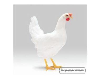 Реализуем инкубационное яйцо Ломан Браун(возможна доставка по Украине)