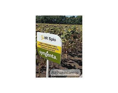 Семена подсолнечника НК Брио (Syngenta) 2016 г.у. импорт