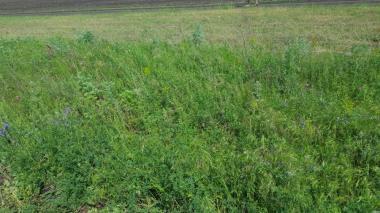 продам луговое сено