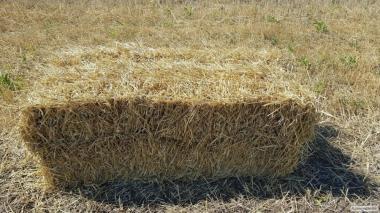 солома в тюках (пшеничне)