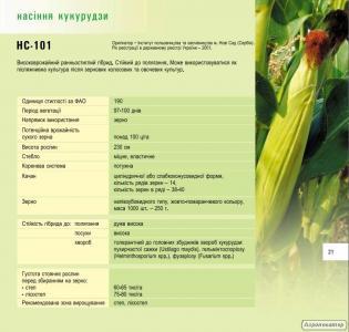 Посадковий матеріал кукурудзи