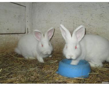 Продам кролів.Різні породи..