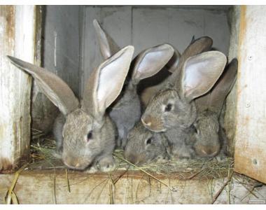 Продам кроликов.Разные породы..
