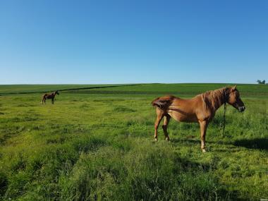 Продам пару робочих коней (2 кобили)