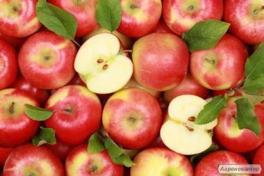 Продам яблоки по хорошей доступной цене
