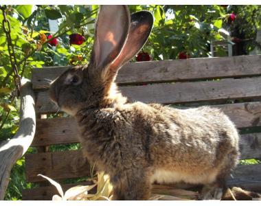 элитные кролики разных пород