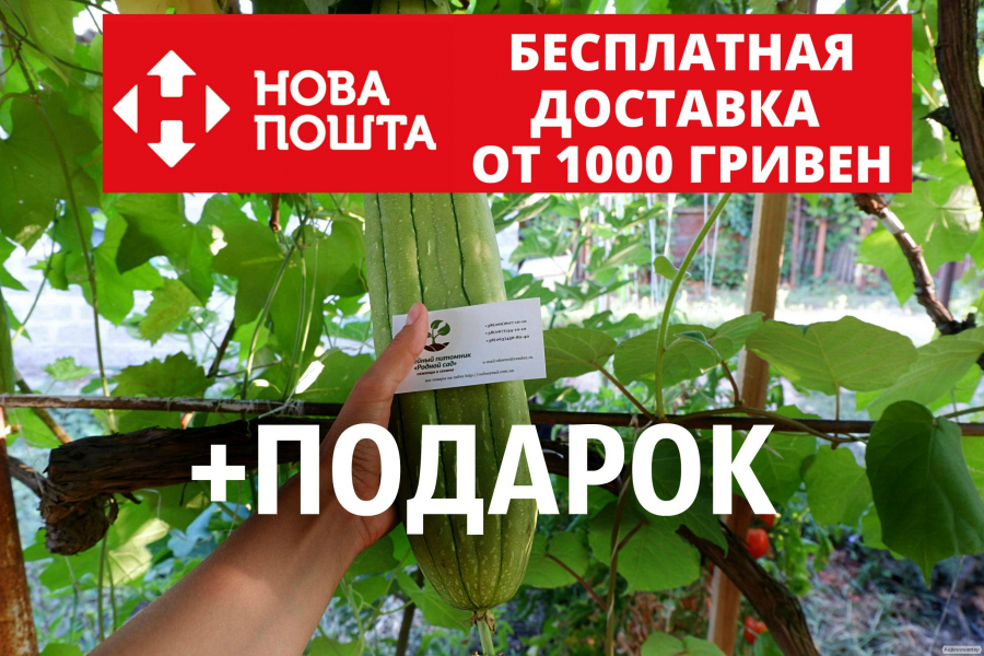 Люффа семена (20 штук) (Luffa,луффа,натуральная мочалка,тыква мочалка)