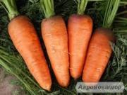 Морковь сахарная и кормовая