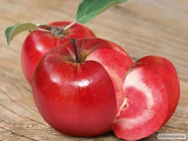 саженцы красномясой яблони сорта Эра от производителя