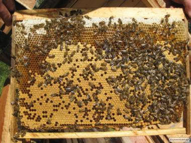 Привезу бджолопакети карпатка 2019 р