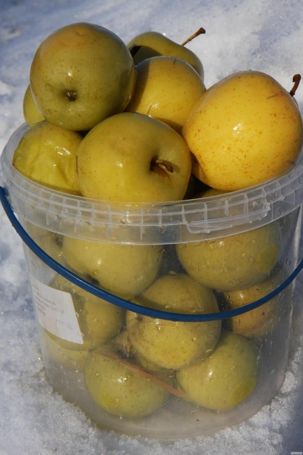 Капуста квашеная с яблоками рецепт с фото