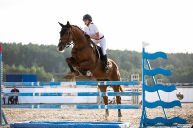 Продается конь конкурный!