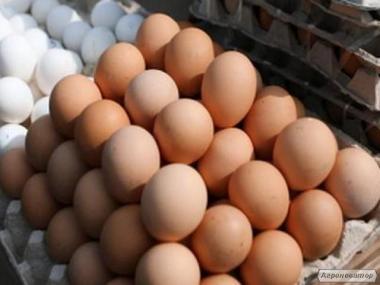 Продам яйце куряче оптом і в роздріб. Всі категорії, біле і коричне
