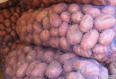 Продам картоплю, сорт Пікассо, Рів'єра ціна від виробника
