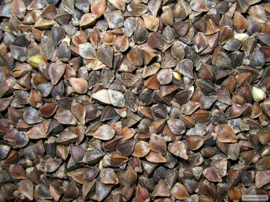 Семена гречихи крупнозернистой.  Сорт Дикуль