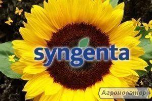 Семена подсолнечника SY LASCALA CRU, Сингента