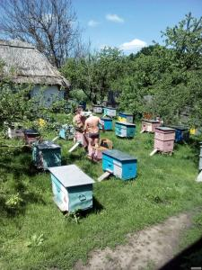 Продам бджолопакети, бджолосім'ї з вуликами
