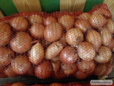 СРОЧНО продам лук СПЕНИШ МЕДАЛЬОН по 3,5-4грн.