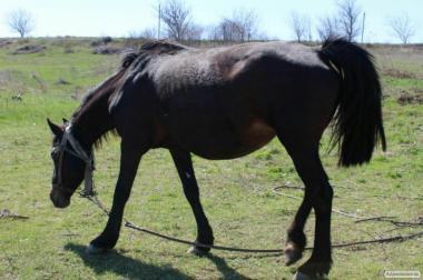 Продаю лошадь рабочую (вместе с повозкой).