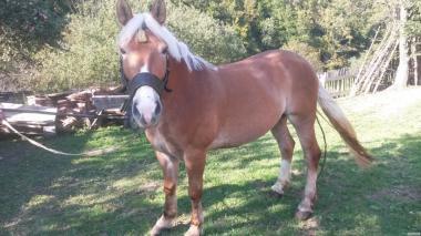 Кінь 10 років, ваговоз, виконує всі господарські роботи.