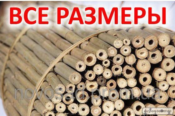 Бамбук, бамбукові стовбури для підв'язки рослин