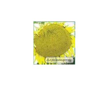 Семена подсолнечника Днестр (стандарт)