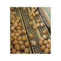 Система збору яєць, яйцезбір, б/у збір яєць