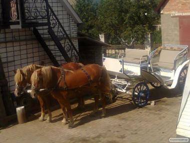 Продам коні і карету