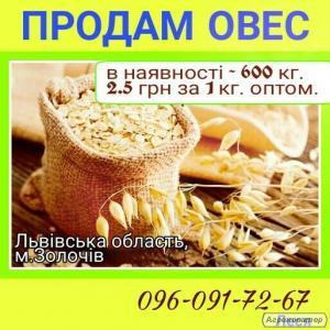 Продам 600 кг овесу Львівська область
