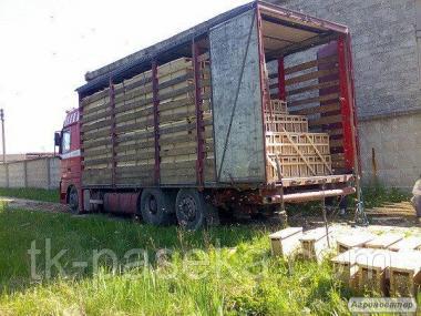 Пчелопакеты Карпатка 2020г с 20.04 с доставкой по Украине.