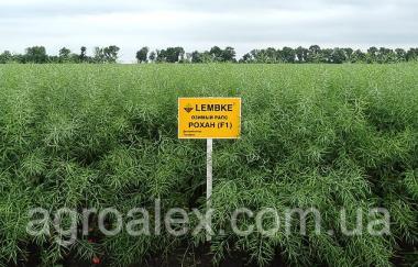 Рохан насіння озимого ріпаку Lembke