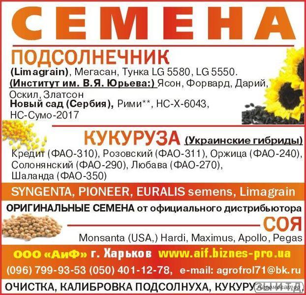 Посевной материал кукурузы украинские гибриды Кредит, Любава