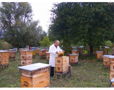 Предлагаем чистопородные пчеломатки