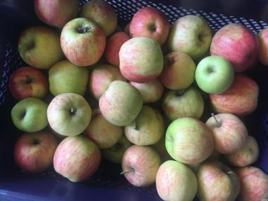 Продамо яблука