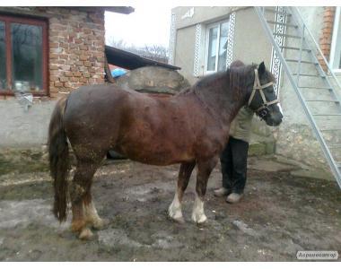 Продам пару коней 4 - 6 років .