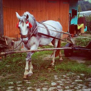 Гарна кобила