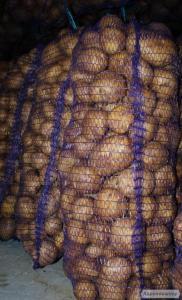 Продаж картоплі сортів Пікассо, Рів'єра