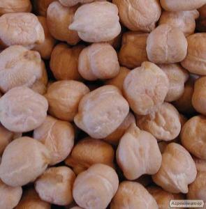 Семена нута Иордан - 1 репродукция (крупноплодный)