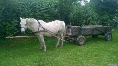 Продам рабочего коня.