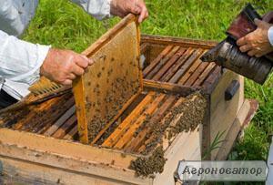 Продам пчелиную семью с ульем