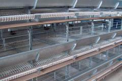 Кліткове обладнання для вирощування курей-несучок ГКН-Ш