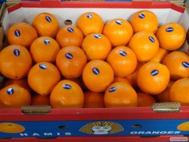 Апельсин от Египетского производителя