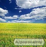 Насіння кукурудзи Гран 220 (ВНІС)