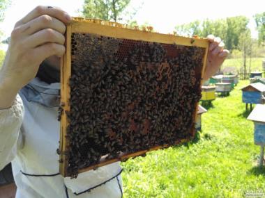 Продам бджолопакети, бжолопакеты.